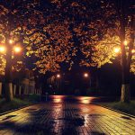 park alley trees in night